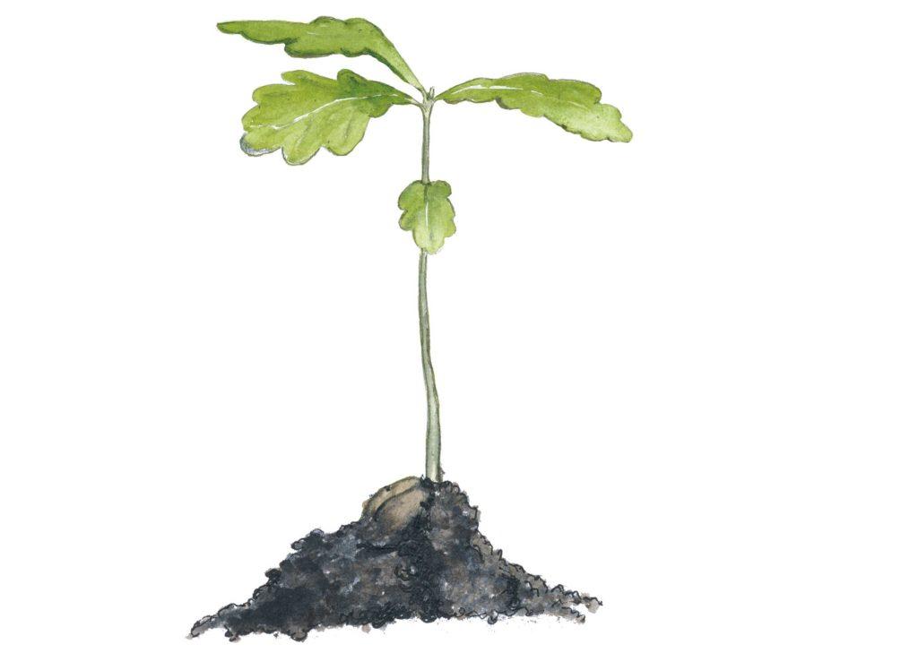 Målad bild på ekplanta